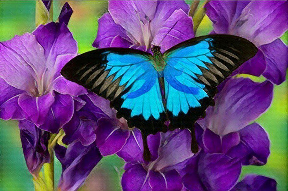 Holo butterfly meme